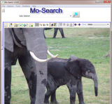 Mo-Search screenshot
