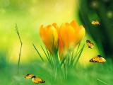 Spring Charm Screensaver screenshot