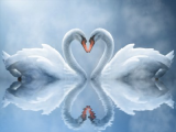 Swan Love Animated Wallpaper screenshot